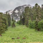 6 в горах кавказа