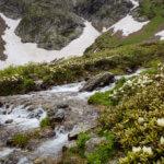 8 рододенроны на кавказе