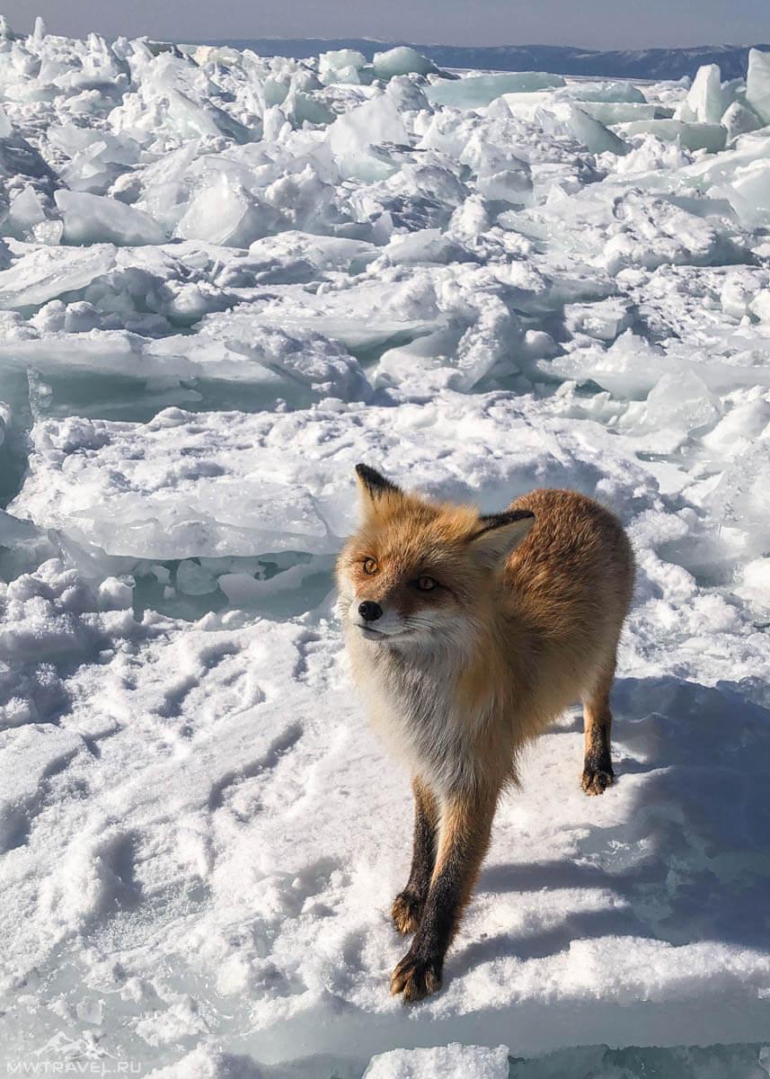 Фототур на Байкал зимой