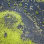 мертвый лес вулкан толбачик камчатка с высоты