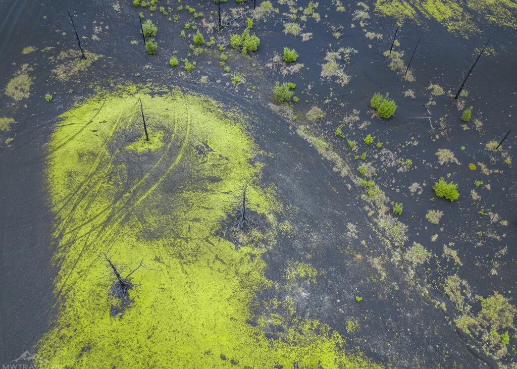 мертвый лес с квадрокоптера