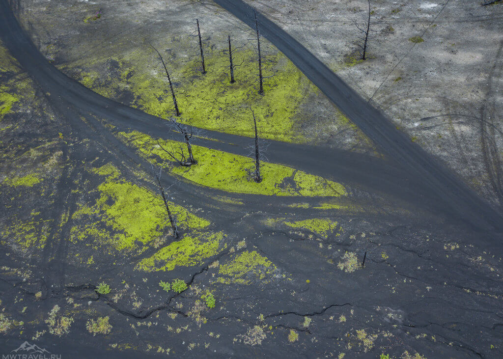 мертвый лес у вулкана толбачки