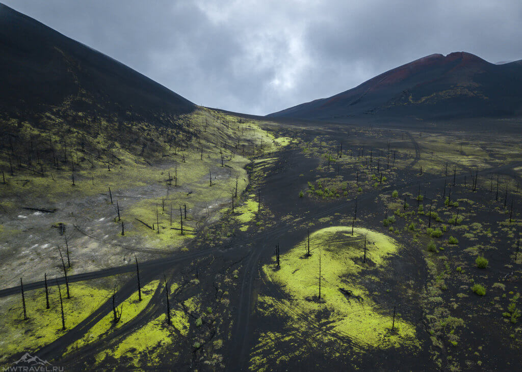 вид на мертвый лес с высоты камчатка толбачик