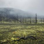 мертвый лес камчатка толбачик поход