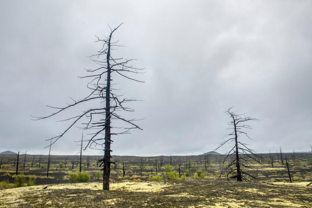 мертвый лес у вулкана толбачик