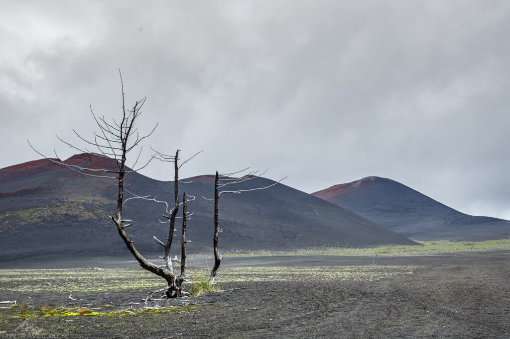 мертвый лес на камчатке вулкан толбачик