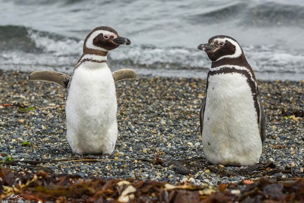 Ушуайя остров пингвинов