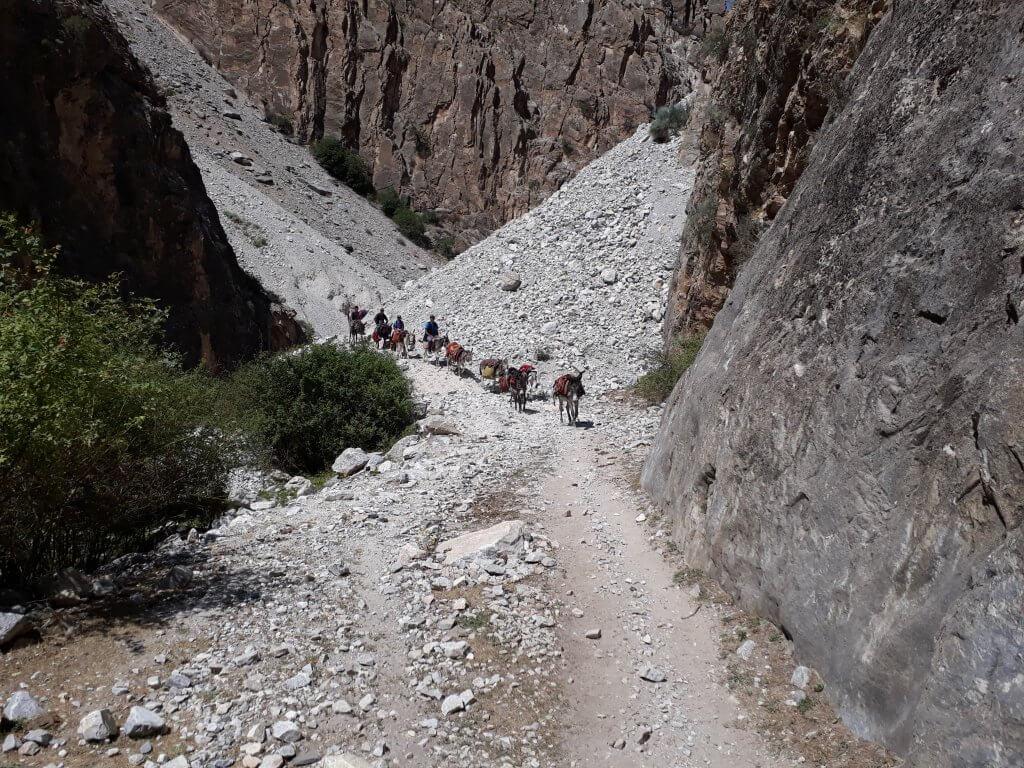 киргизия горы конный тур