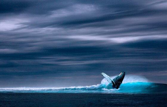Териберка: киты на Баренцевом море