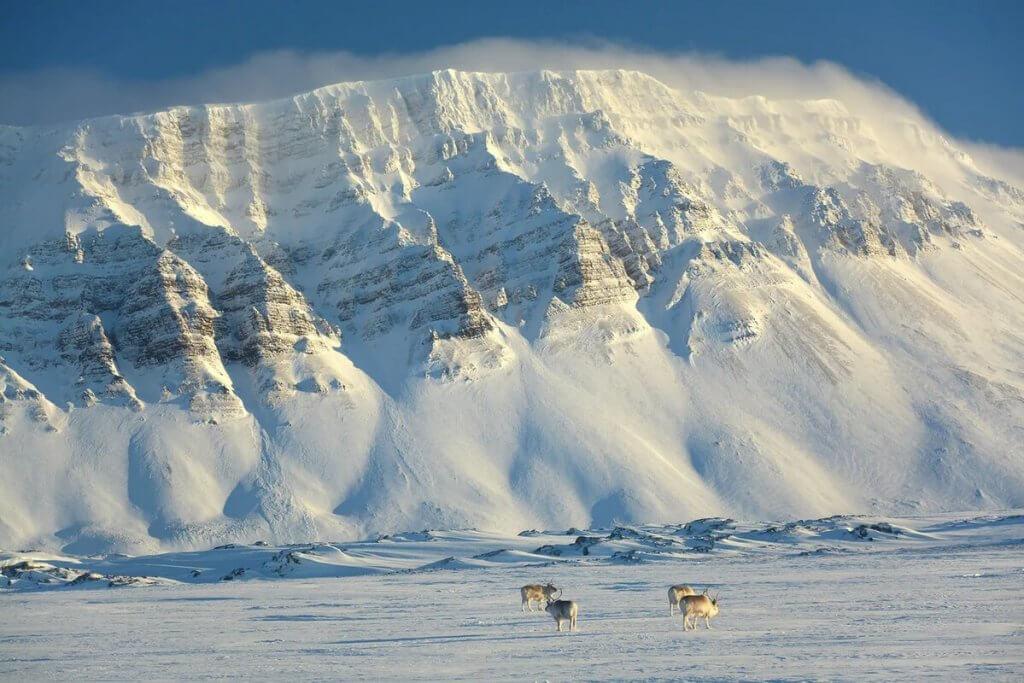 тур к северным оленям
