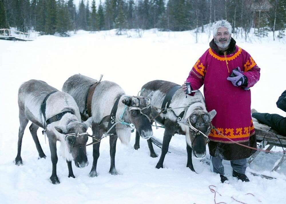 У саамских северных оленей