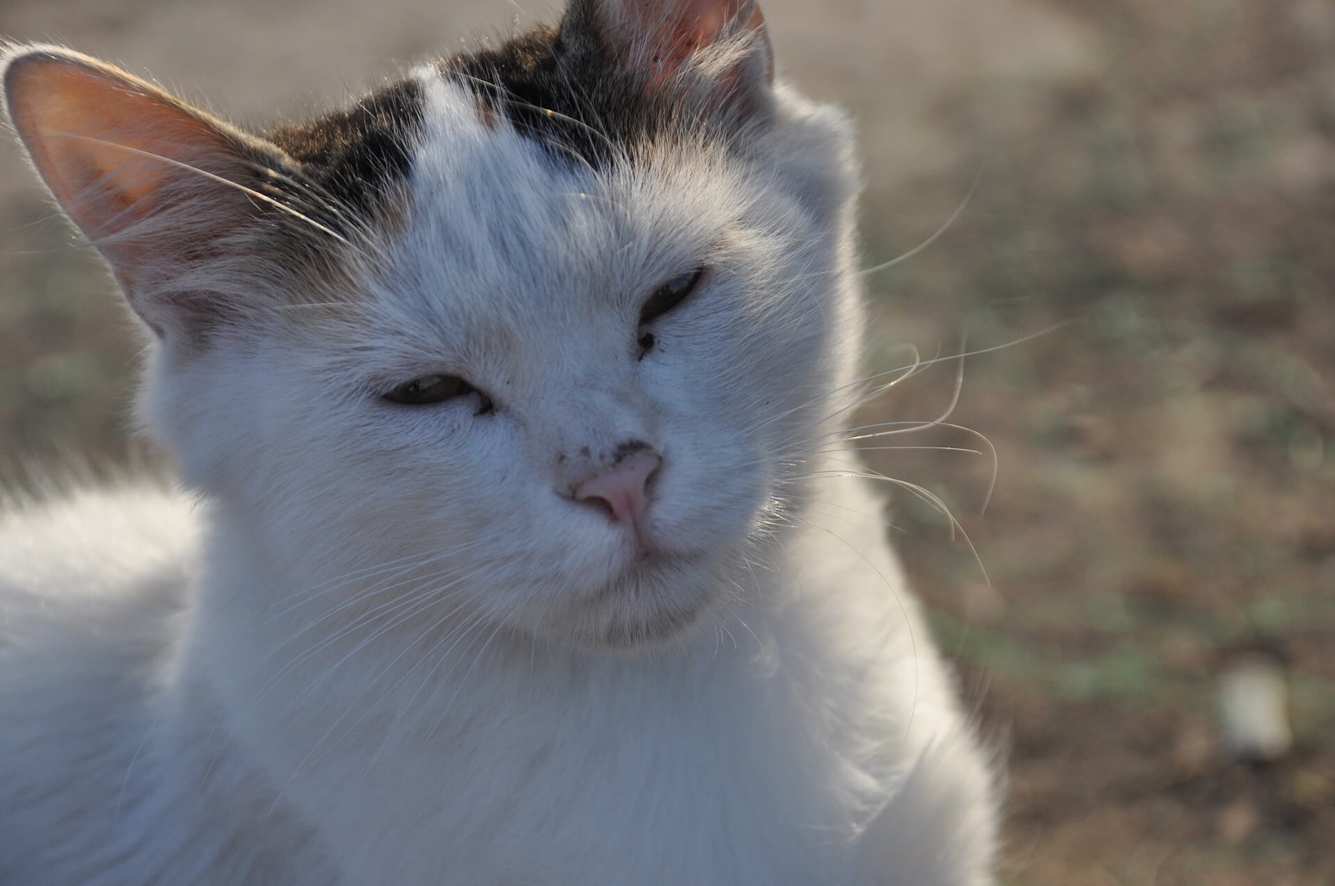 Западная Ликийская тропа кот Анталия