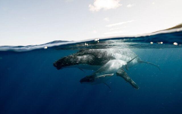 Где увидеть китов