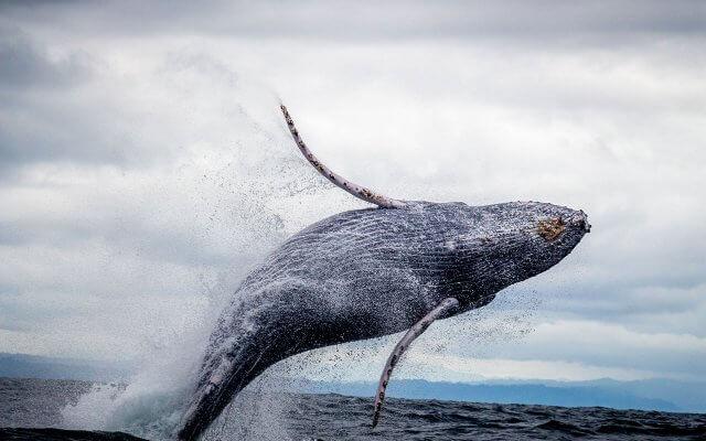 Где посмотреть китов